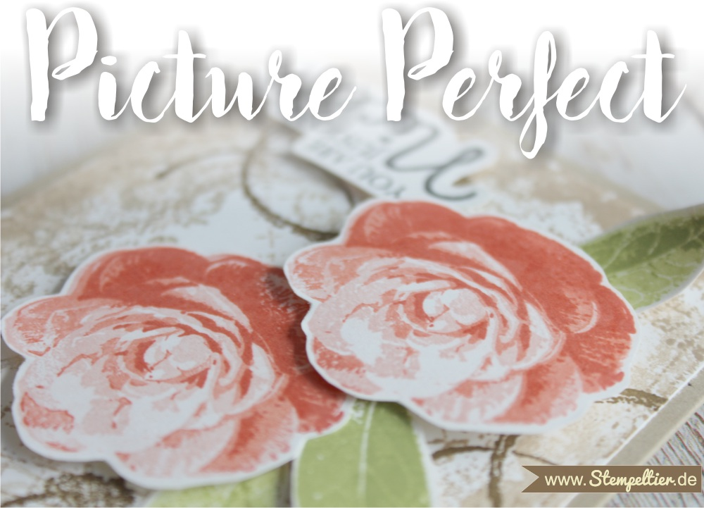 picture perfect timeless textures Rosen roses stempeltier grußkarte geburtstag you are just the nicest 2 step stamping technique 1