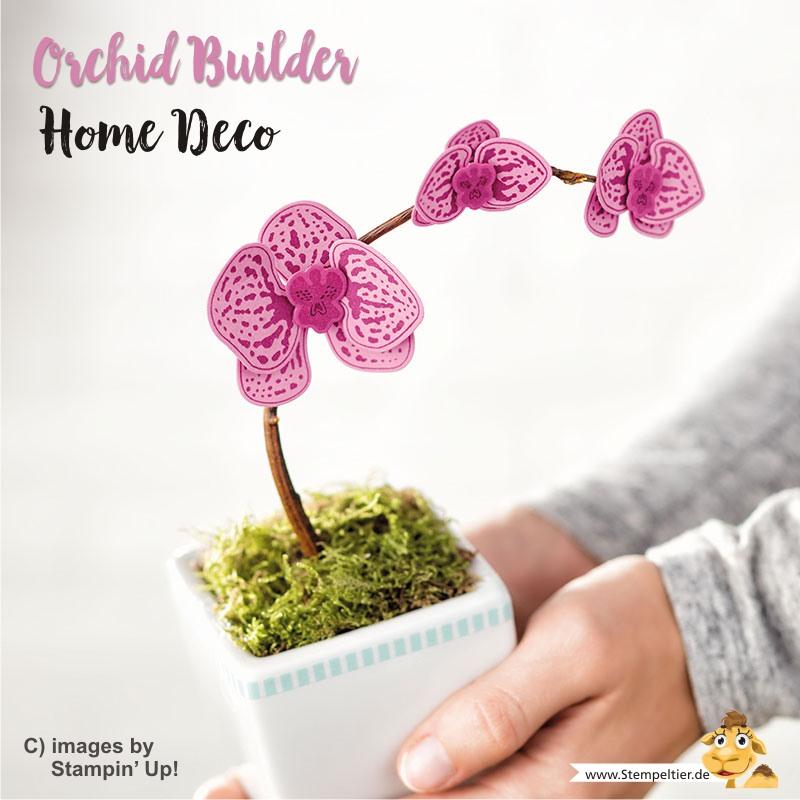 stampin up blog orchideen climbing orchid orchideenzweig orchid builder stempeltier homedeco