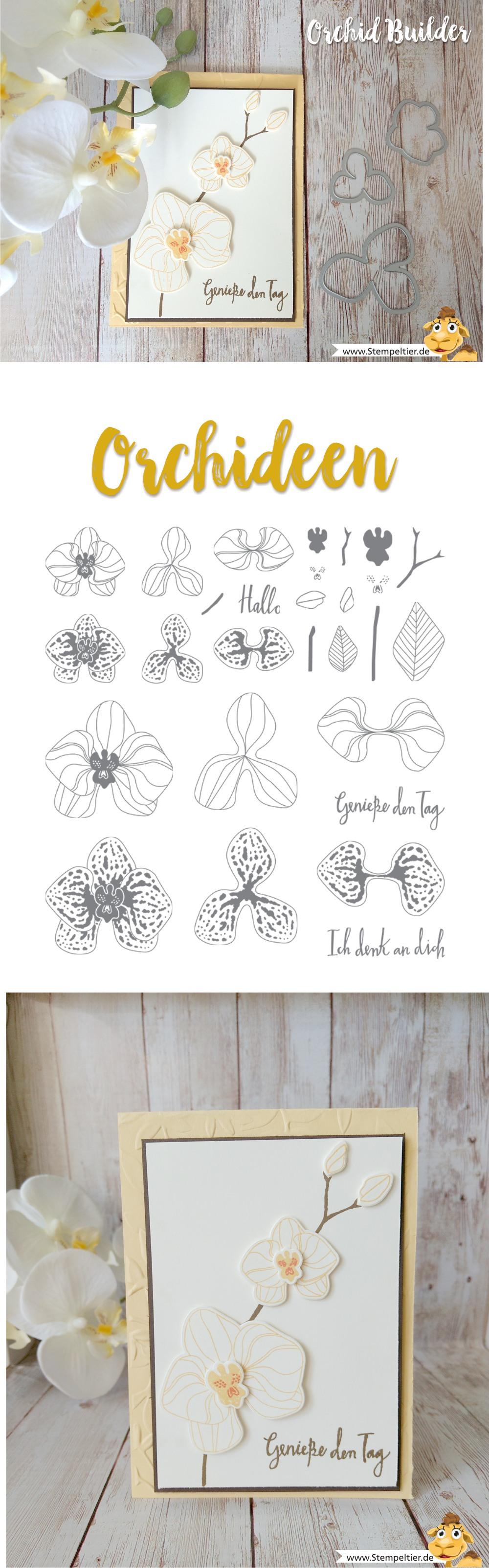 stampin up blog orchideen climbing orchid orchideenzweig orchid builder stempeltier verpacken