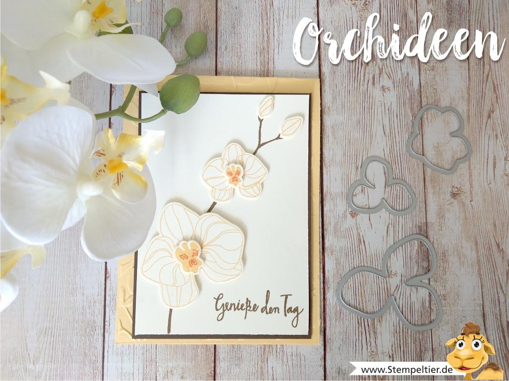 stampin up blog orchideen climbing orchid orchideenzweig orchid builder stempeltier