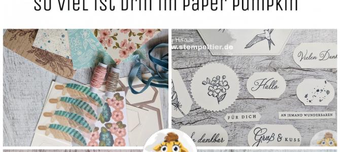 Paper Pumpkin im Detail